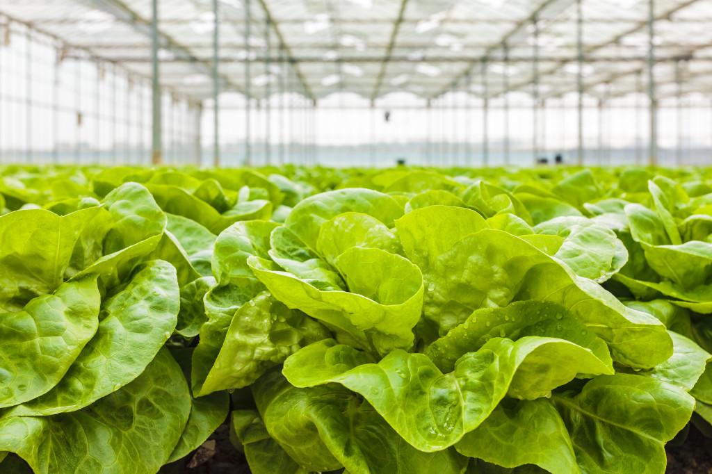 Gro-Rite Greenhouses